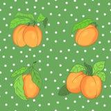 Безшовная картина с абрикосами Стоковое фото RF