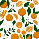 Безшовная картина с апельсинами, цветками и листьями иллюстрация штока