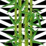 Безшовная картина с бамбуковыми заводами и листьями Стоковые Фотографии RF