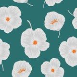 Безшовная картина с белыми цветками на зеленой предпосылке Стоковое Изображение