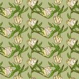 Безшовная картина с белыми цветками тюльпанов Стоковые Фото