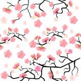 Безшовная картина с ветвью вишневого цвета Сакуры вектор Стоковые Изображения