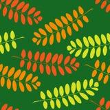 Безшовная картина с ветвями акации иллюстрация вектора