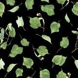 Безшовная картина с ветвями и листьями липы, картины акварели Стоковые Изображения