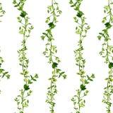 Безшовная картина с ветвями тимиана Стоковое Фото