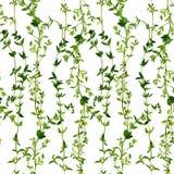 Безшовная картина с ветвями тимиана Стоковая Фотография