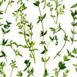 Безшовная картина с ветвями тимиана Стоковые Фото