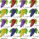 Безшовная картина с виноградинами Стоковая Фотография