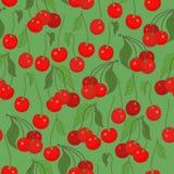 Безшовная картина с вишнями Стоковые Изображения