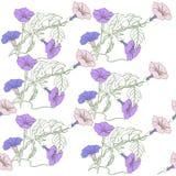 Безшовная картина с голубым розовым вьюнком иллюстрация вектора