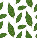 Безшовная картина с заводами diffenbachia, зеленый цвет выходит милое wal бесплатная иллюстрация