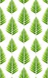 Безшовная картина с зелеными листьями папоротника на белизне стоковое фото rf