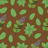 Безшовная картина с зеленым пиперментом Стоковая Фотография RF