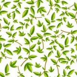 Безшовная картина с зеленым цветом лист выходит на белую предпосылку Бесплатная Иллюстрация