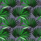 Безшовная картина с листьями ладони Стоковые Изображения RF