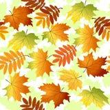 Безшовная картина с листьями желтых и красного цвета Стоковая Фотография