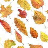Безшовная картина с листьями осени в акварели Стоковая Фотография RF