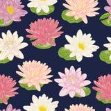 Безшовная картина с лилией воды Элементы флористического дизайна собрания декоративные Цветки и листья