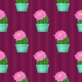 Безшовная картина с кактусом Стоковые Изображения
