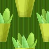 Безшовная картина с кактусом Стоковое Изображение