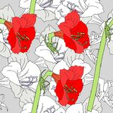 Безшовная картина с красными серыми амарулисами иллюстрация вектора
