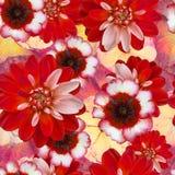 Безшовная картина с красным георгином цветет на запачканной флористической предпосылке Старый винтажный коллаж стиля Стоковое Изображение RF