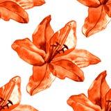 Безшовная картина с красочными лилиями цветет на белой предпосылке комплект зацветать флористический для wedding приглашений Стоковое фото RF