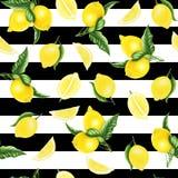 Безшовная картина с лимонами и листьями и половина лимона, картины акварели Стоковое фото RF