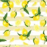 Безшовная картина с лимонами и листьями и половина лимона, картины акварели Стоковые Фотографии RF