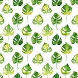Безшовная картина с листьями акварели тропическими Стоковое Фото