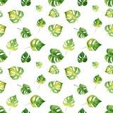 Безшовная картина с листьями акварели тропическими Стоковое Изображение
