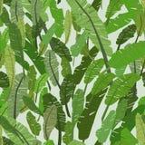 Безшовная картина с листьями зеленого цвета банана, Стоковые Изображения