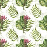 Безшовная картина с листьями и protea ладони Стоковые Изображения RF