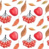 Безшовная картина с листьями осени и чертеж рябины акварелью, рукой нарисованные элементы Стоковые Фотографии RF