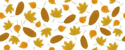 Безшовная картина с листьями осени на белой предпосылке Стоковая Фотография RF