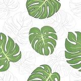 Безшовная картина с листьями тропических заводов Monstera иллюстрация вектора