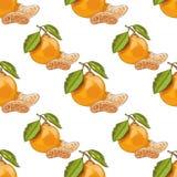 Безшовная картина с мандаринами Стоковые Фото