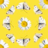 Безшовная картина с маргаритками и бабочками Стоковая Фотография RF