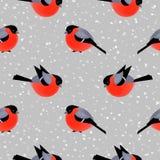 Безшовная картина с милыми bullfinches в зиме Стоковые Изображения