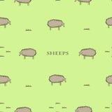 Безшовная картина с овцами Стоковые Изображения RF