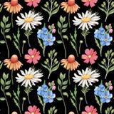 Безшовная картина с одичалым летом цветет на черноте Стоковые Изображения