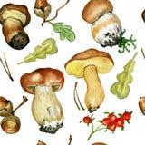 Безшовная картина с одичалыми грибами Акварель нарисованная рукой Стоковые Фотографии RF
