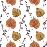 Безшовная картина с падая листьями, сухими ягодами Стоковая Фотография