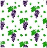 Безшовная картина с предпосылкой виноградин, иллюстрация вектора