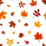 Безшовная картина с различными листьями осени на белизне также вектор иллюстрации притяжки corel Стоковое Фото