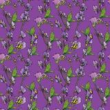 Безшовная картина с реалистическими графическими цветками на фиолетовом backdr Стоковое Изображение