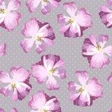 Безшовная картина с розами пастельного пинка Стоковая Фотография RF