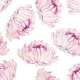 Безшовная картина с розовыми хризантемами Стоковая Фотография