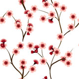 Безшовная картина с розовыми цветками вишни Стоковые Изображения RF