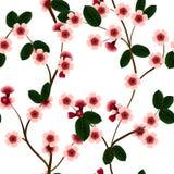 Безшовная картина с розовыми цветками и лист вишни Стоковые Изображения RF